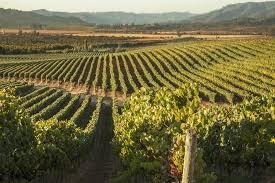 11-9-vineyard-2